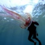Meduse | quali sono le cose da fare dopo una puntura di medusa? Come comportarsi?